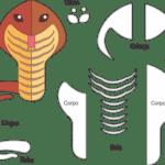 Molde de Cobra para Feltro – EVA e Artesanatos 6