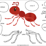Molde de Formiga para Feltro – EVA e Artesanato 6