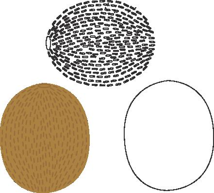Molde de Kiwi para EVA - Feltro e Artesanatos1