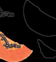 Molde de Mamão Papaya para EVA - Feltro e Artesanatos1.1