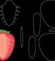 Molde de Morango para EVA - Feltro e Artesanatos1.1