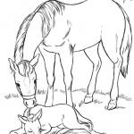 Desenhos para Colorir de Animais Cavalos