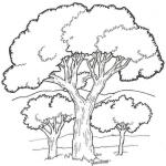 Imagem de Árvore em PNG