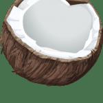 Coco vetorizado 01