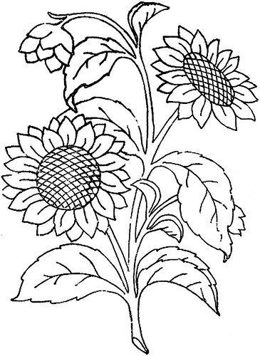 Desenhos de girassol lindos desenhos infantil para for Plantas ornamentales para colorear