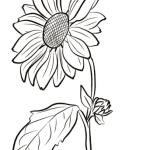 Desenhos Infantil para Colorir de Girassol