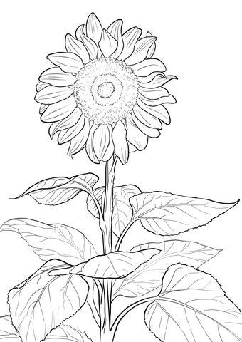 Desenhos de girassol lindos desenhos infantil para for Girasoli di van gogh da colorare