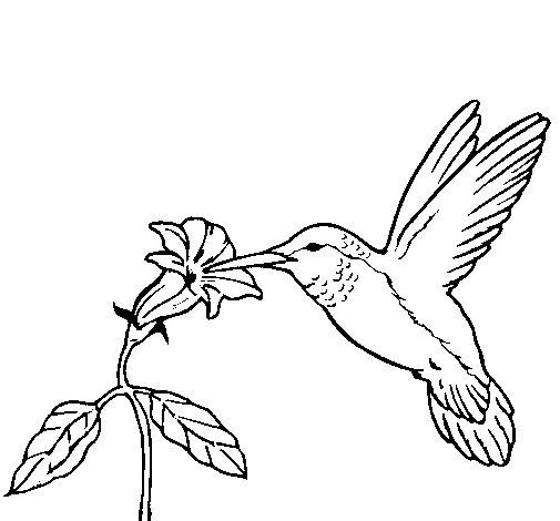 Desenhos Para Colorir Colibri E Uma Flor