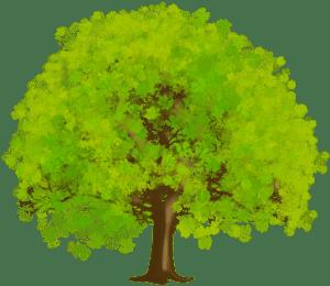 Árvores - Árvore 10
