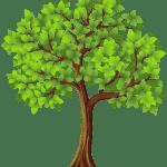 Árvores – Árvore 2 PNG