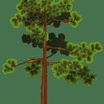 Árvores – Árvore 3 PNG