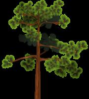 Árvores - Árvore 3