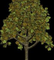 Árvores - Árvore 5