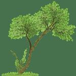 Árvores – Árvore 8 PNG
