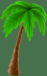Árvores - Coqueiro 3
