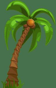 Árvores - Coqueiro 4