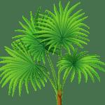 Árvores – Coqueiro 6 PNG