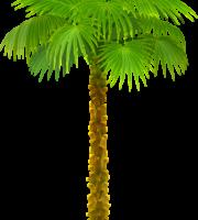 Árvores - Coqueiro 8