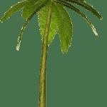 Árvores – Coqueiro 9 PNG