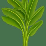Árvores – Folhas Palmeira PNG