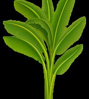 Árvores - Folhas Palmeira