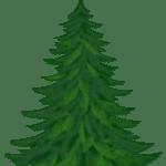 Árvores – Pinheiro 2 PNG
