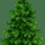 Árvores – Pinheiro 3 PNG
