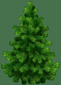 Árvores - Pinheiro 3