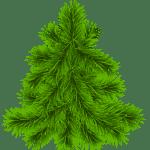 Árvores – Pinheiro PNG