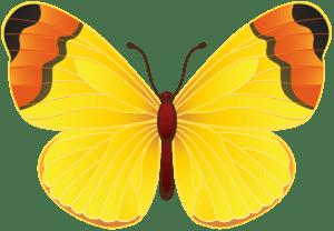 Borboletas - Borboleta Amarela 2