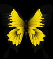 Borboletas - Borboleta Amarela e Preta