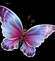 Borboletas - Borboleta Bonita Colorida 14