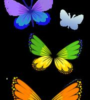 Borboletas - Borboleta Bonita Colorida 2