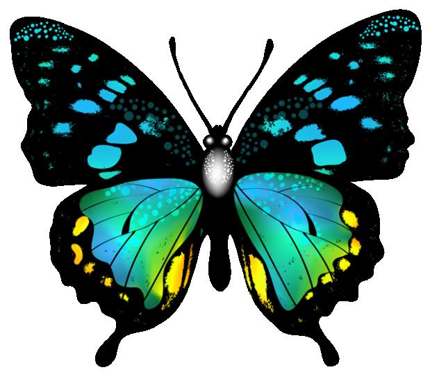 Borboleta Bonita Colorida 3 PNG Imagens E