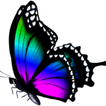 Borboletas – Borboleta Bonita Colorida 4 PNG