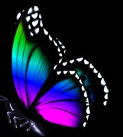 Borboletas - Borboleta Bonita Colorida 4