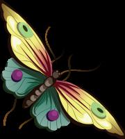Borboletas - Borboleta Bonita Colorida 7