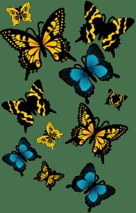 Borboletas - Borboleta Laranja e Azul 2