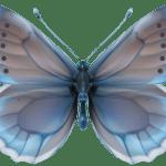 Borboletas – Borboleta Realista Azul PNG