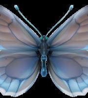 Borboletas - Borboleta Realista Azul