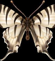 Borboletas - Borboleta Realista Branca 2