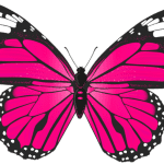 Borboletas – Borboleta Rosa e Preta 3 PNG