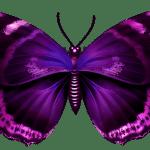 Borboletas – Borboleta Roxa e Preta 2 PNG