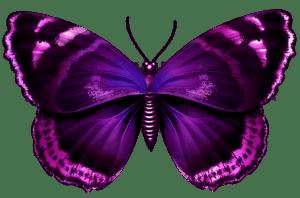 Borboletas - Borboleta Roxa e Preta 2