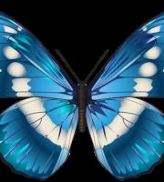 Borboletas - Borboleta Tons de Azul
