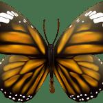 Borboletas – Borboleta Tons de Laranja e Preto 2 PNG