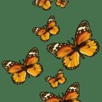 Borboletas – Borboleta Tons de Laranja e Terra 3 PNG