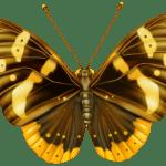Borboletas – Borboleta Tons de Laranja e Terra 4 PNG