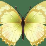 Borboletas – Borboleta Tons de Verde PNG