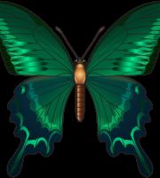 Borboletas - Borboleta Verde e Preta 3